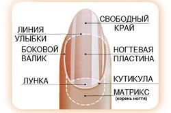 Выбор формы ногтей по форме кутикулы