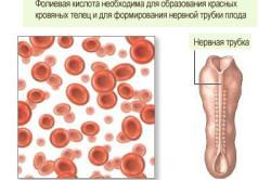Влияние фолиевой кислоты