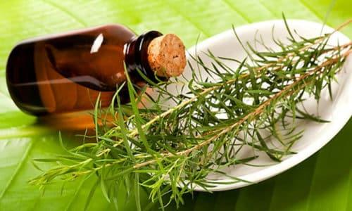 При герпетических высыпаниях за ухом может применяться эфирное масло чайного дерева