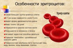 Особенности эритроцитов