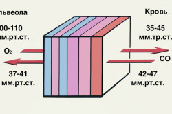 Схема диффузии газов крови через альвеолярнокапиллярную перегородку