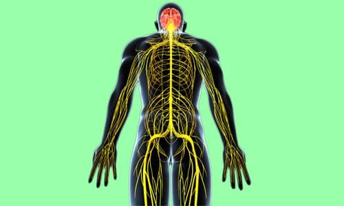 Гормон T3 отвечает за работу нервной системы и головного мозга