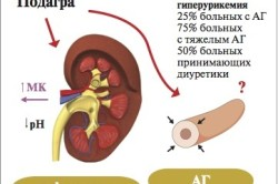 Строение органов малого таза