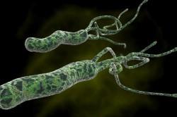 Helycobacter pylori - причина отрыжки