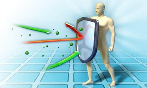 Полезные свойства столетника используются с давних времен для повышения общего иммунитета