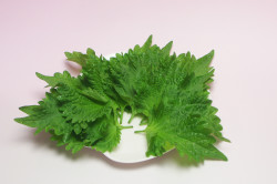 Листья крапивы при задержке месячных