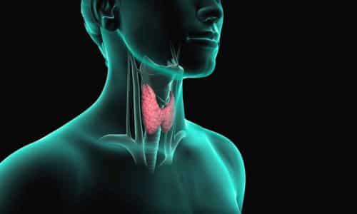 Состояние щитовидной железы зависит от количества йода, содержащегося в теле человека