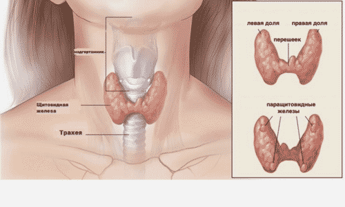 Аденома паращитовидной железы (код по МКБ 10 — Е21.4, гиперпаратиреоз и другие уточненные нарушения паращитовидной (околощитовидной) железы) — это новообразование доброкачественного характера