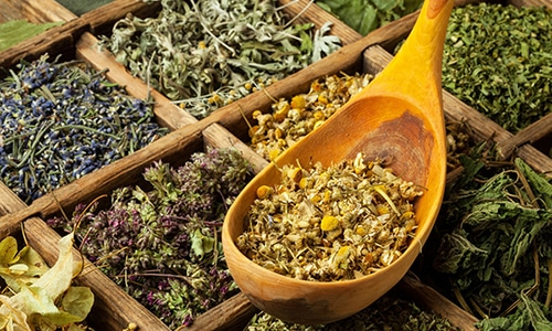 При герпесе используются противовирусные, общеукрепляющие и обеззараживающие травы